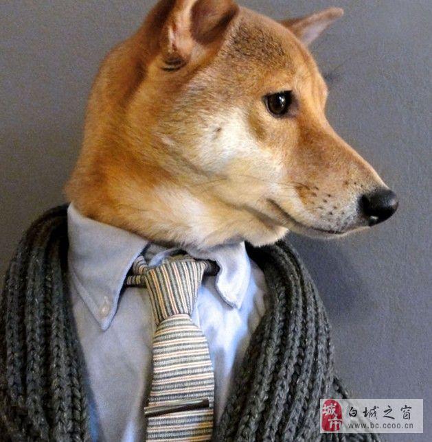 doge柴犬贱头像