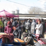 威尼斯人娱乐开户宠物市场一游