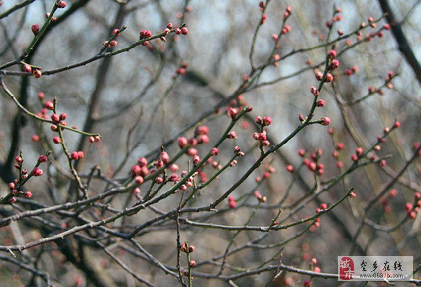 春天来了,春精灵给了桃树妹妹一个深情的吻