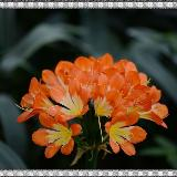 [原创]武汉植物园观花