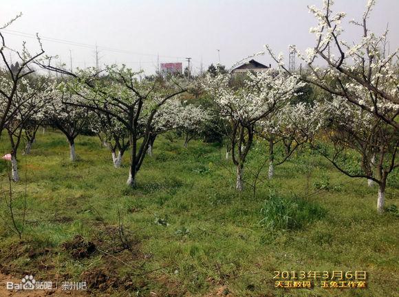 成都崇州花果山风景区