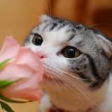[原��]春天到了,��味道吧~~