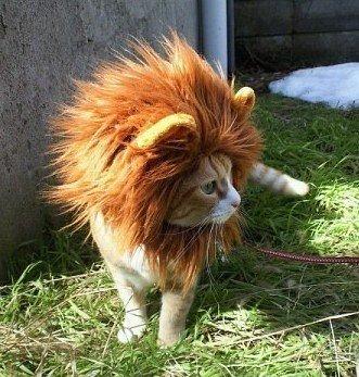 猫王就应该长成我这样!