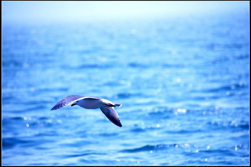 微信海欧风景动态图片