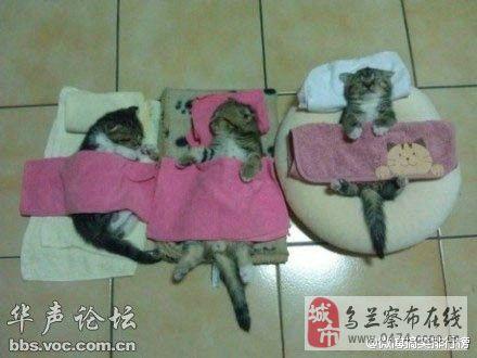 睡觉可爱图片萌萌蒙古图片