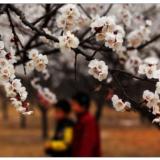 [原��]春回古城