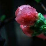 娇滴滴的花!