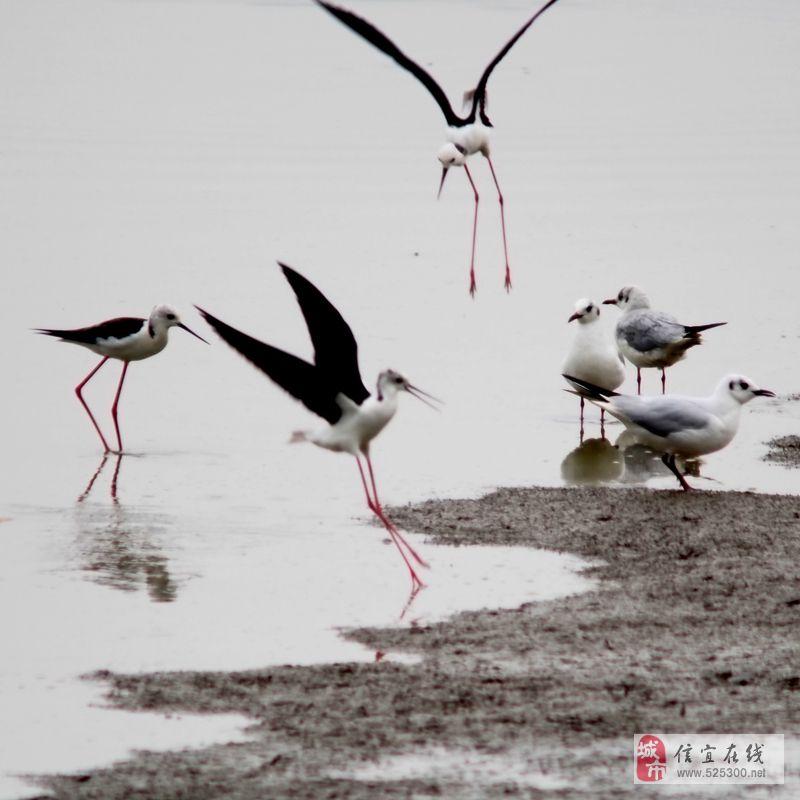 [原创]香港南生围雀鸟拍摄