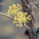 拥抱春天――三月主题――杨党怀摄