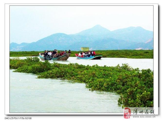 春游值得去的地方:云霄县竹塔红树林