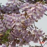 交城美丽的花朵