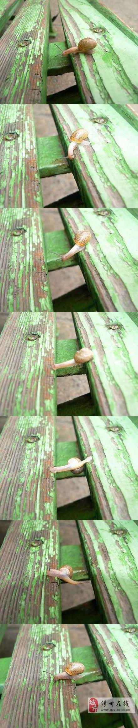 很多时候,你是不是还不如这只蜗牛?