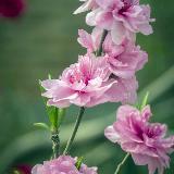 一组新拍微距花卉