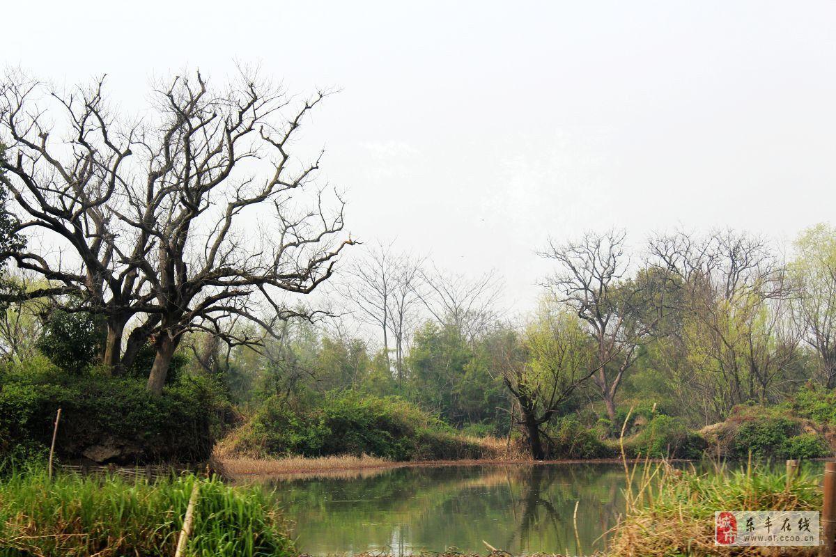 西溪湿地―非诚勿扰拍摄地