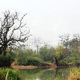 西溪湿地—非诚勿扰拍摄地