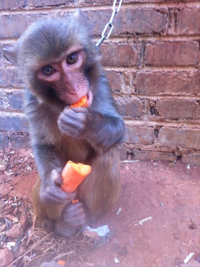 [原创]可爱的小猴子