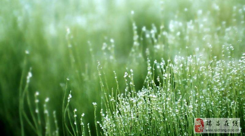 沐浴春雨出游 听春天正在奏起的圆舞曲