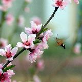 参赛作品――桃花依旧笑春风  雨墨听风