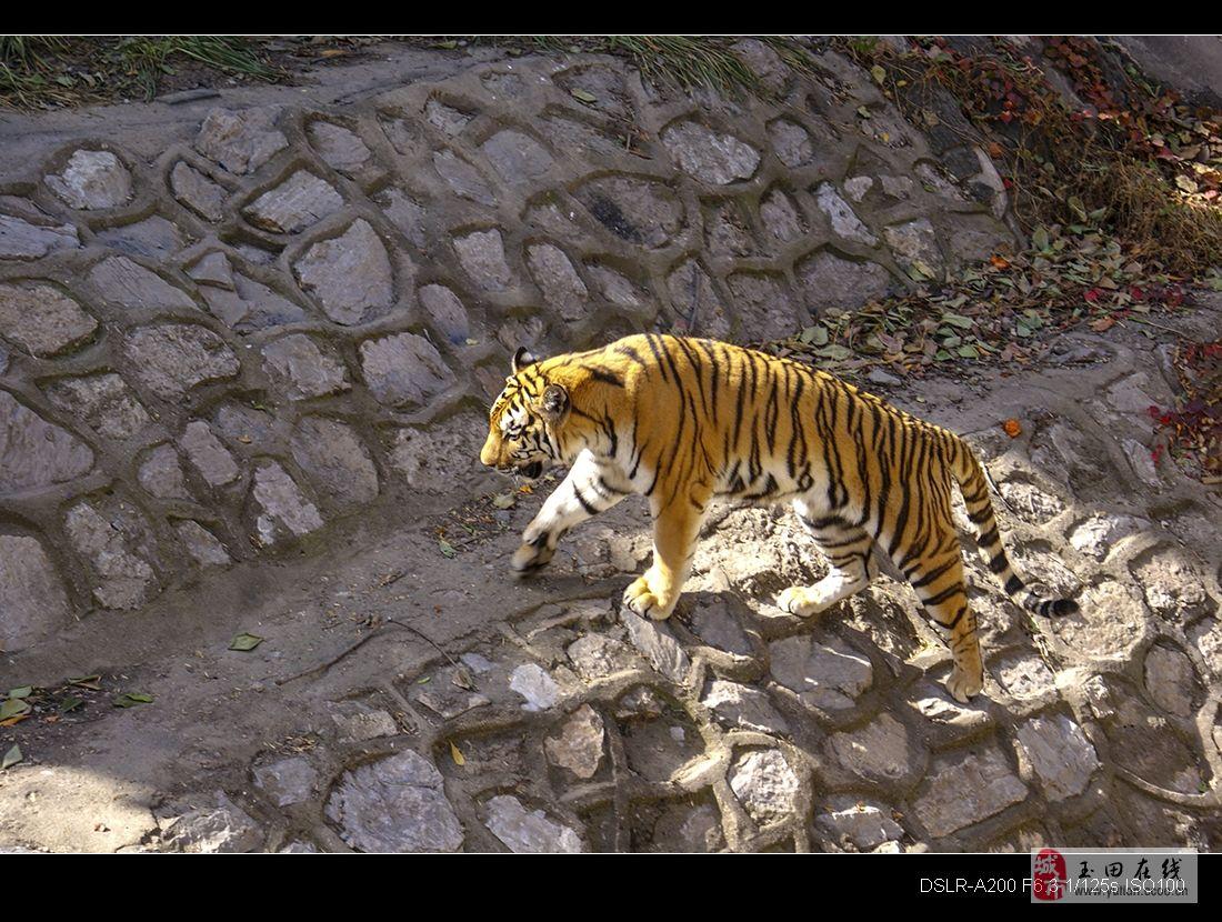 北京动物园-玉田摄影