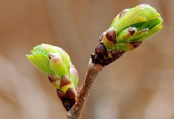 [推荐]春之韵