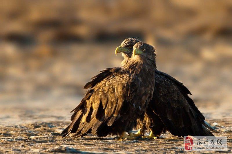 [分享]   野生态,需保护