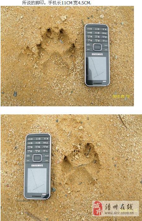 [灌水]云霄驴友在笔架山下见疑似传说中的豹子脚印