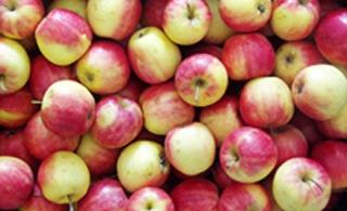 小四平苹果