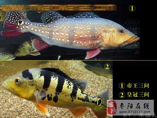 鱼 淡水 鱼 的 种类 图片 大全 鱼 鱼类 700 我国 淡水 ...