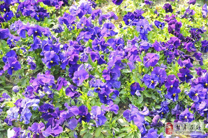 春天小花蝴蝶图片