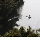 [贴图]在仁寿青岗观鱼鹰捕鱼