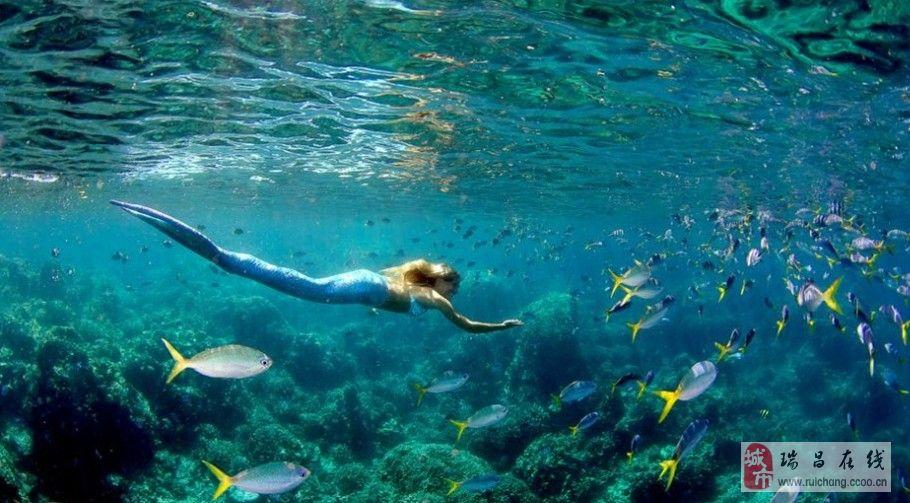 壁纸 海底 海底世界 海洋馆 水族馆 桌面 910_503