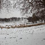 牧羊-玉田�z影
