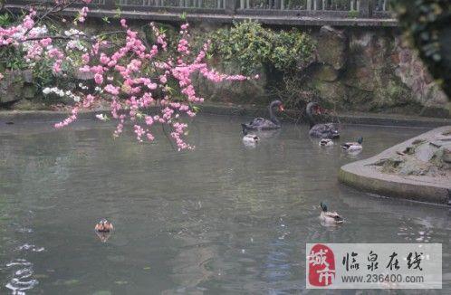 方特二期梦幻王国 杭州动物园 西湖雷峰塔