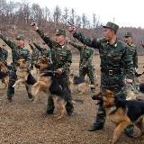 哇卡卡!朝鲜军犬真牛X!