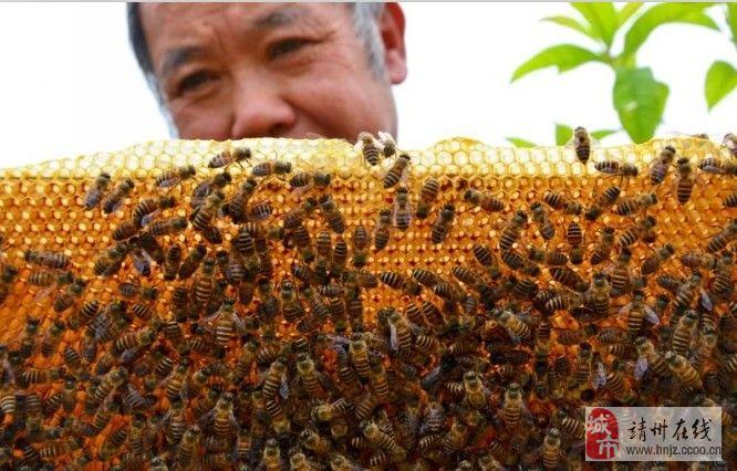 退休教师自学养蜂成师傅 愿与村民同致富 (图文)