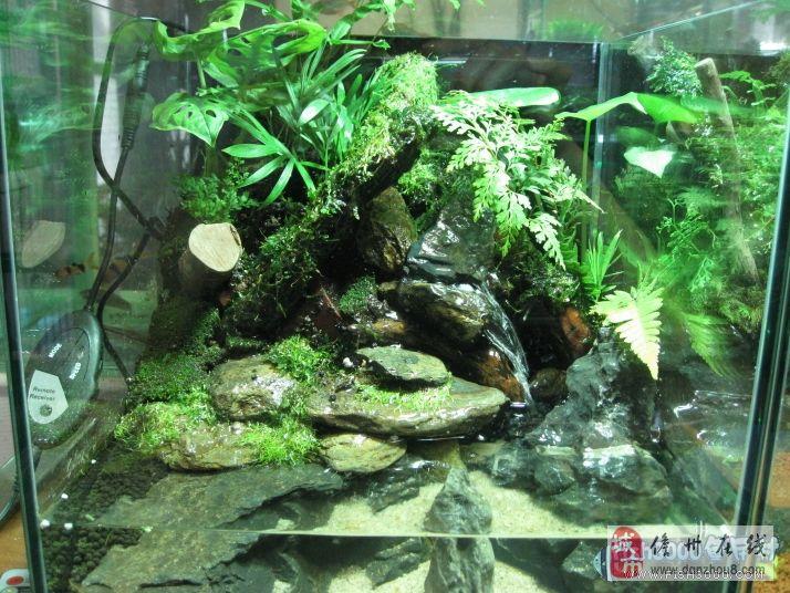 那就要做个水陆缸了.不过龟会吃鱼.例如图片