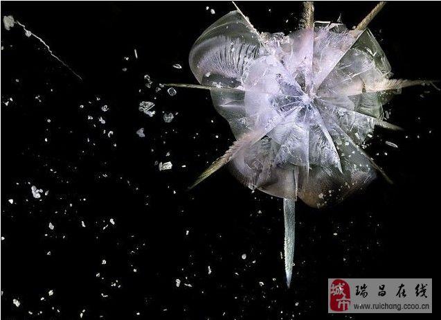 美仑美焕:子弹穿透玻璃精彩瞬间