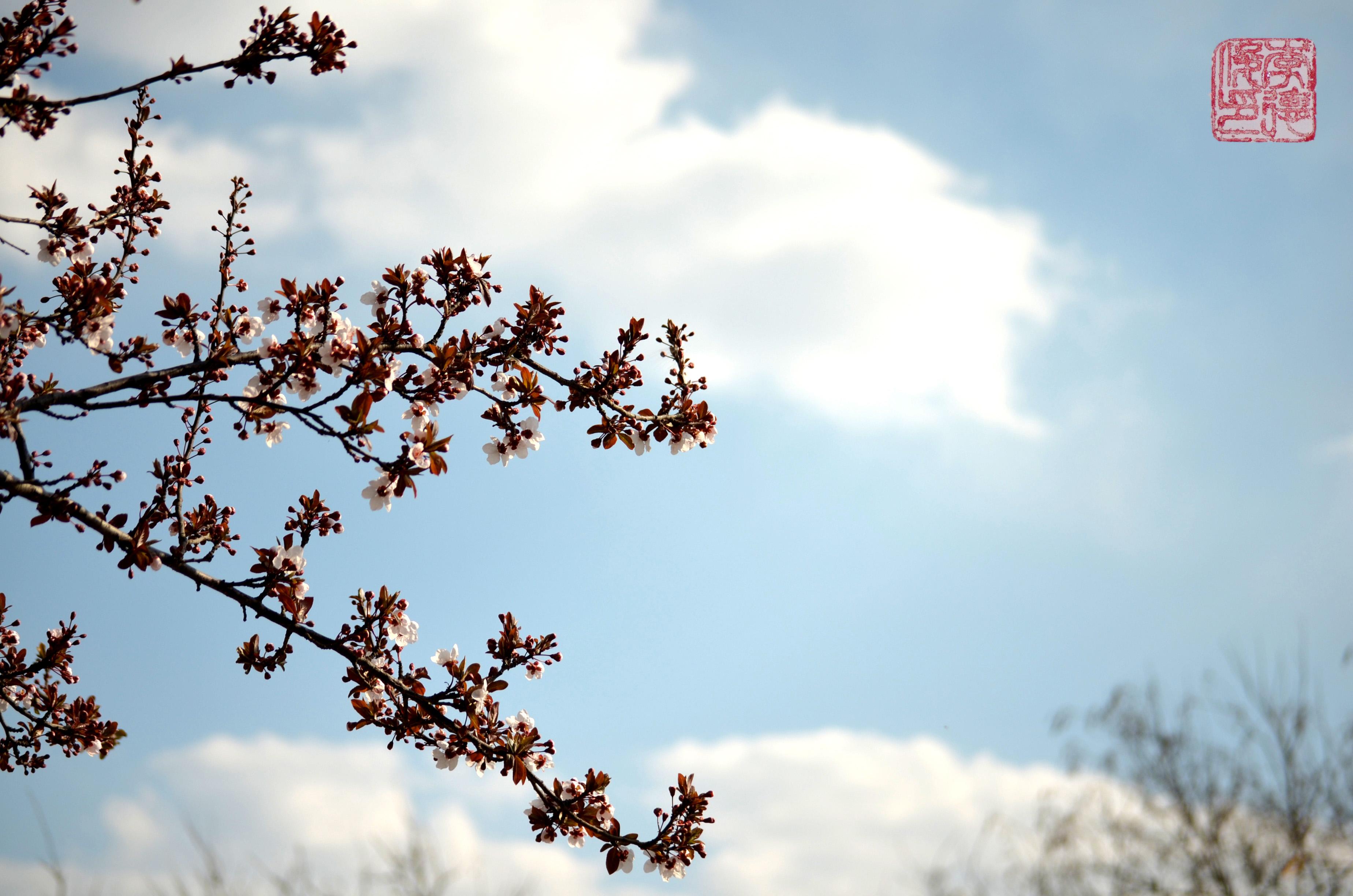 语文教学春天的风景