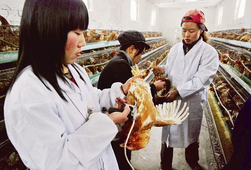 阻击禽流感我们全力以赴