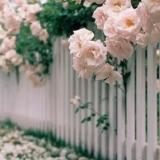 �P于某��的花,爆料也�Σ黄�侵鬟@���月的精心栽培!