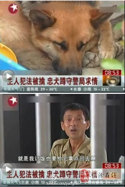 主人犯法被擒 忠犬蹲守警局见警察就求情