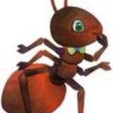 好n b的蚂蚁