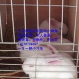 玉花�H兔