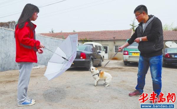 狗对人突然下蹲等反应强烈 专家称狗有五种性格