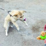 狗对人突然下蹲等反应强烈 专?#39029;?#29399;有五种性格