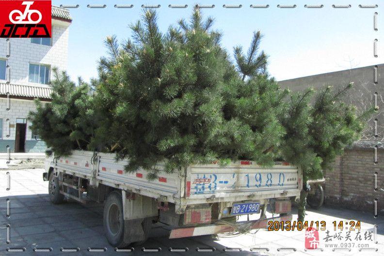 【活动掠影】2013年4月13日护国寺义务植树剪影