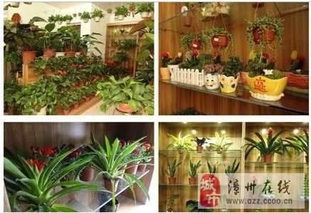 绿色植物,刚装修房子的进来看看。带给你家的温馨,健康,美观