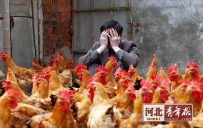 面对突如其来的H7N9疫情,他们欲哭无泪