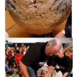 ��逃6年的�d羊�e��了一身60磅的羊毛
