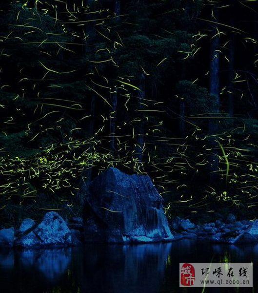 到天台山看萤火虫啦_邛崃——旅游_邛崃论坛_邛崃在线